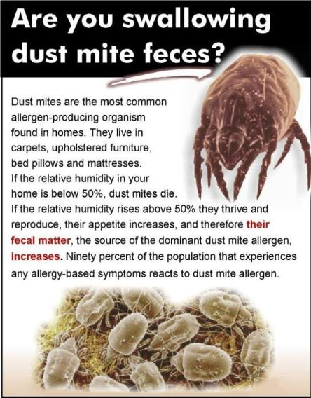 Dust Mite Treatment Mattress Cleaning Adams Carpet Cleaning